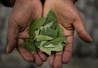 benefits of coca leaf
